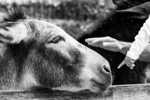 Donkey Friendship